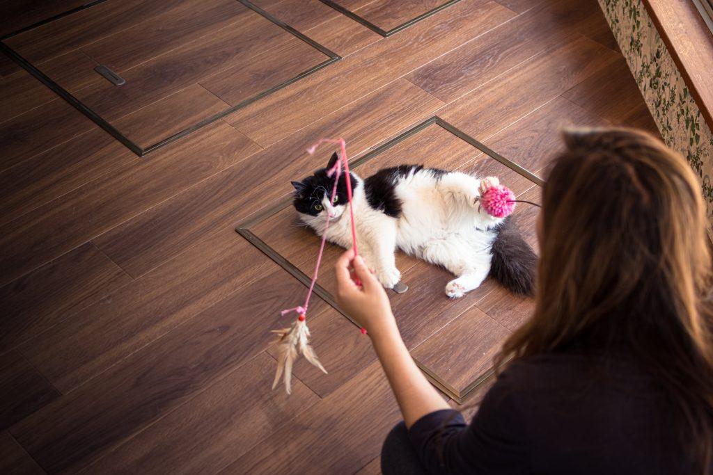 Cat Café ofrece puesto de niñera