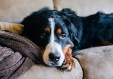 Qué siente un perro antes de morir: muerte de una mascota