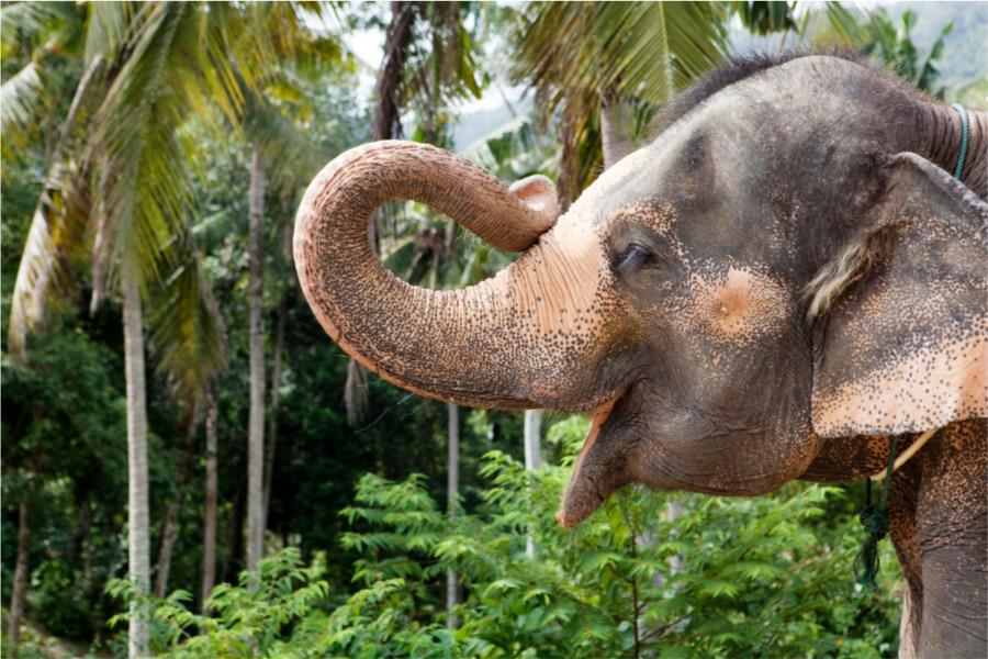 Cuidar elefantes en Tailandia