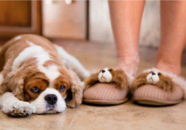 Pantuflas idénticas a tu mascota
