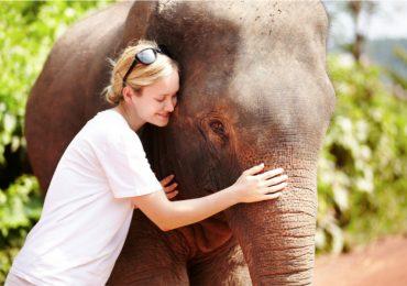 Voluntariado en Tailandia para cuidar elefantes