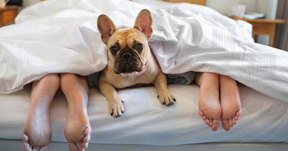 quien-se-queda-con-el-perro-despues-de-una-ruptura