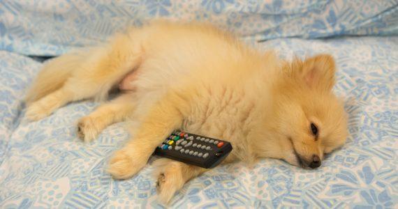 dormir-con-tv-te-hace-engordar