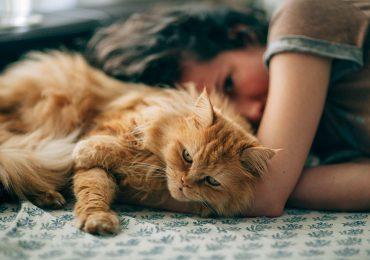 Gatos: cómo afecta tu personalidad y emociones a tu gato