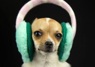 spotify-mascotas