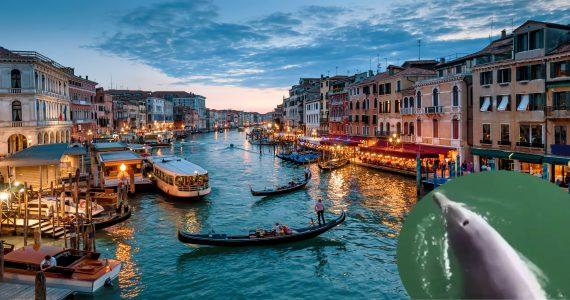 canales de venecia delfines