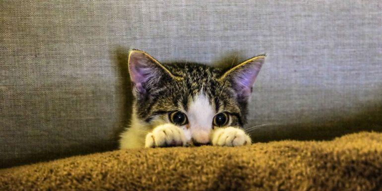 gato-cuarentena