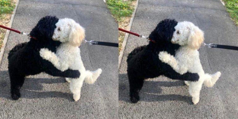 reencuentro-perritos