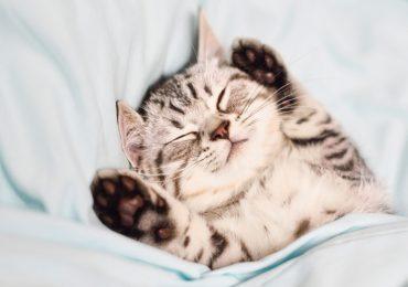gatos-reconocen-nombre