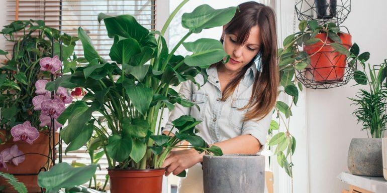 plant-parents-termino