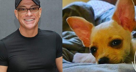 ¡Awww, amamos! Jean-Claude Van Damme salva la vida de una perrita sin papeles