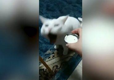 Viral: Las náuseas de un gato ante la comida que le ofrecen sus dueños