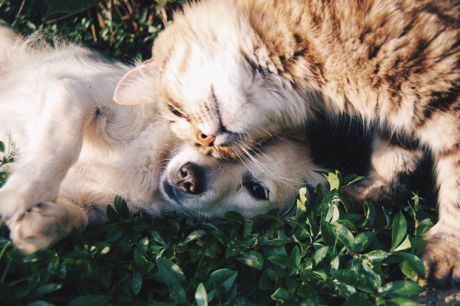 Ver videos de animales lindos es bueno para tu salud, según estudio