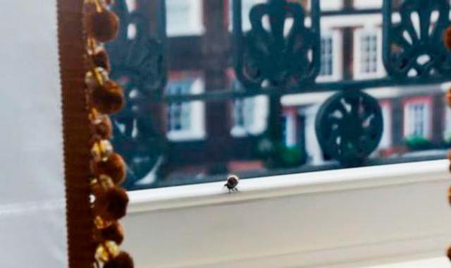 """Así será la segunda temporada de """"Bridgerton"""" y su relación con las abejas"""