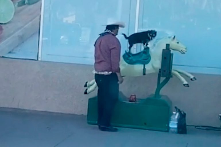La perrita que se hizo viral cabalgando caballo mecánico ya tiene cuenta de TikTok