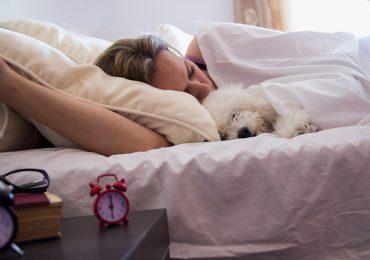 Dormir con tu perrito es mejor que hacerlo con tu pareja, lo dice un estudio