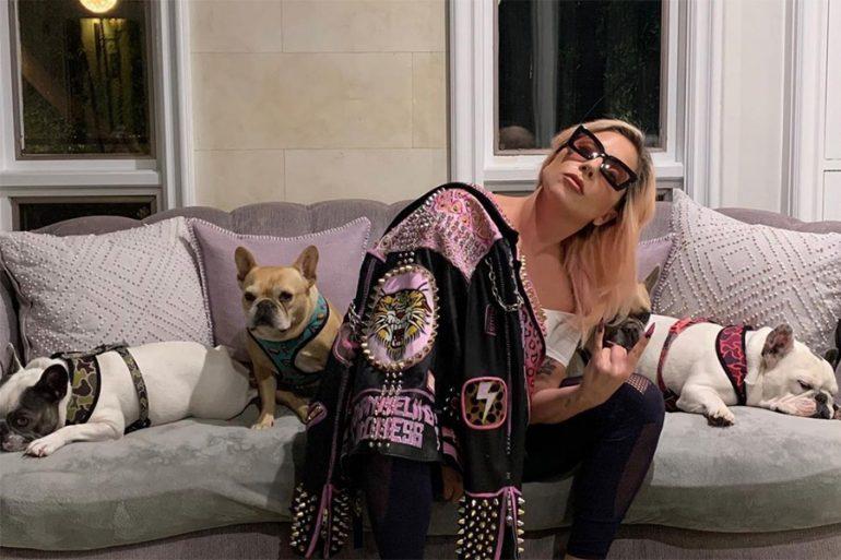Secuestran a los perritos de Lady Gaga tras dispararle a su paseador