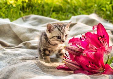 Un chica advierte sobre tener lirios en casa después de que su gato se envenenara