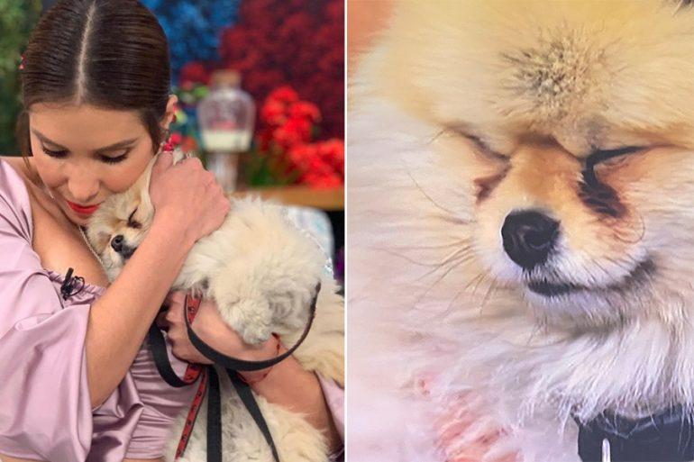 """""""Tomasito"""", el perrito de la fallecida Magda Rodríguez, llora en programa porque la extraña (VIDEO)"""