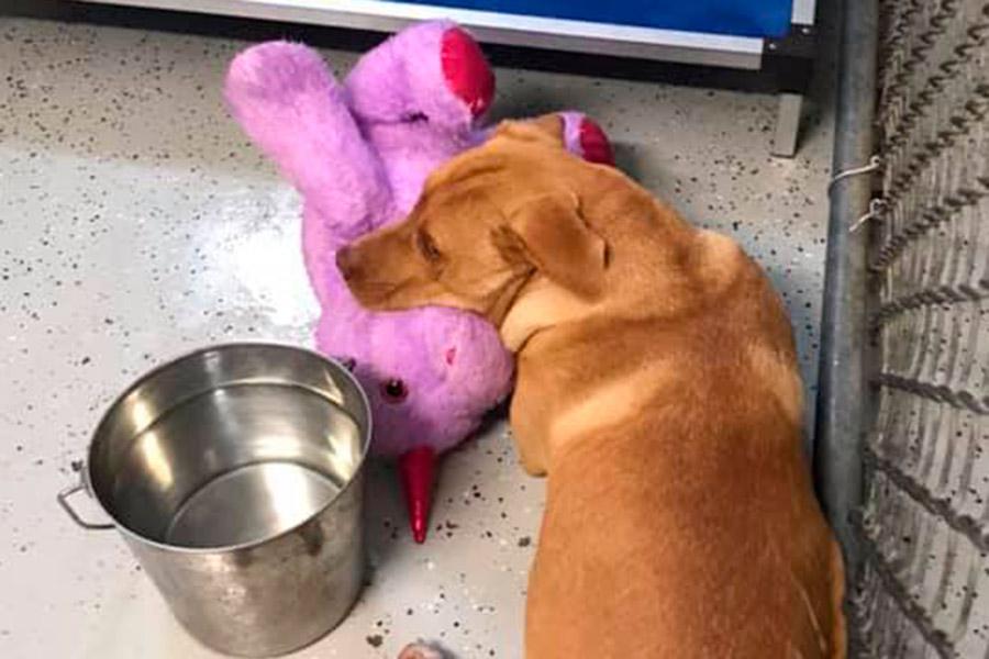 Perrito callejero se robaba unicornio de peluche hasta que un refugio se lo compró