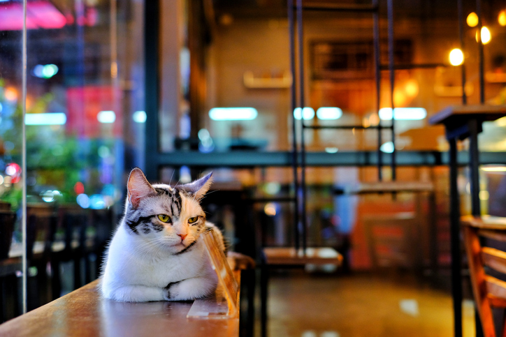 Cafés de gatos que debes conocer