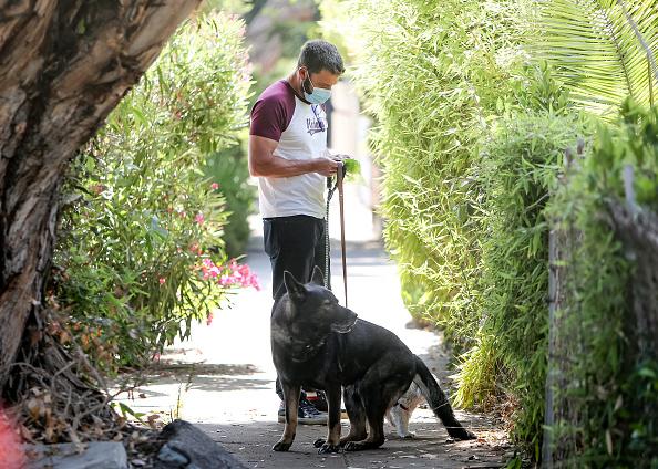 ben affleck paseando a su perro