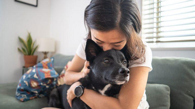 muerte de mascota difícil superar como muerte familiar