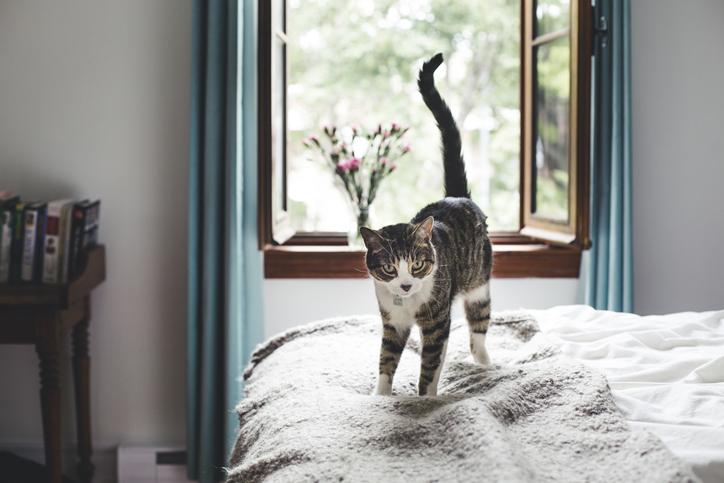 como demuestran su amor los gatos cola
