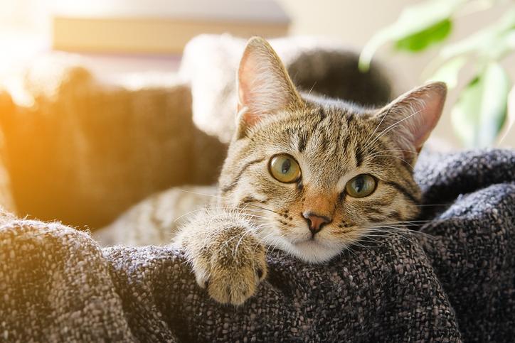 como demuestran su amor los gatos mirada