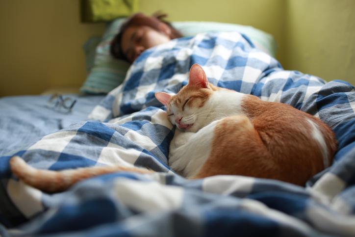 como demuestran su amor los gatos siesta