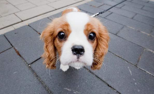como educar a un cachorro para ir al baño