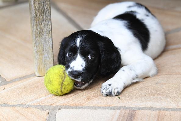 perro mordiendo una pelota de tenis