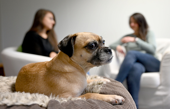 mejores perros para vivir en departamentos pug
