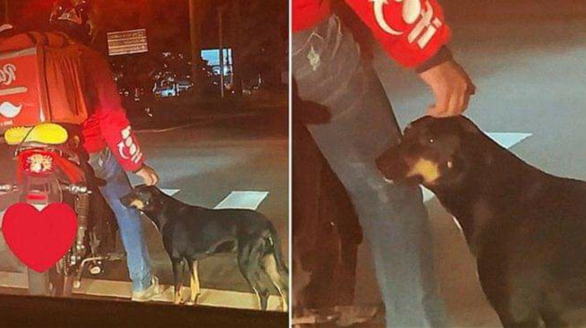 perrito en semaforo pide cariño repartidor lo adopta