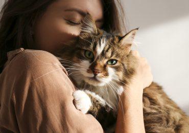 por que los gatos prefieren a las mujeres lo que dice la ciencia