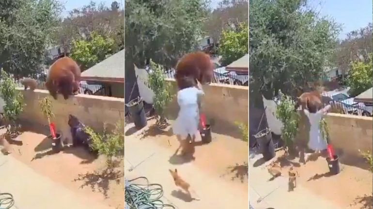 Mujer enfrenta a un oso para defender a sus perritos en el patio de su casa