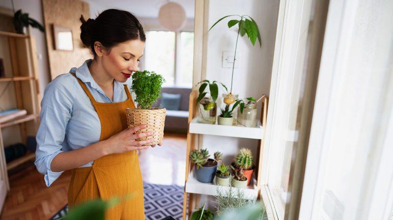 Herbolaria mexicana: hierbas ideales para la relajación, la belleza y darle sabor a la vida